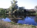 Saale - toter Flussarm